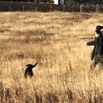 Kedvelik Somogyot a külföldi vadászok
