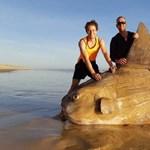 """Olyan """"halszörny"""" ért partot Dél-Ausztráliában, amire nehezen találunk szavakat"""