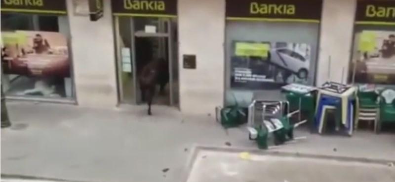 Bika ment be egy spanyolországi bankba – videó