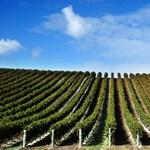 Így még nem gázoltak bele francia bortermelők lelkébe