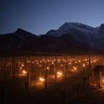 Begyújtottak a svájci szőlőknek