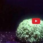 Most először sikerült levideózni a korallfehéredést