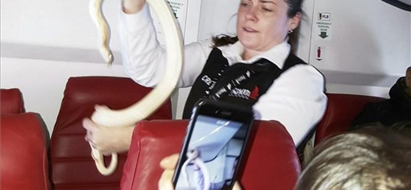 Kígyópara egy repülőn: nagyon bátor volt ez a stewardess – fotó