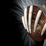Előkerült a bizonyíték arra, hogy már 512 millió éve is voltak élősködők