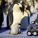 Fotó: túl aranyosra sikeredett a robotpingvin