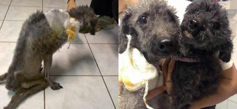 Állatkínzás Óbudán: magokon tartotta lebénult kutyáját
