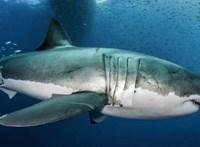 Nem vicc, a cápatartásról tanácskoznak Nyíregyházán