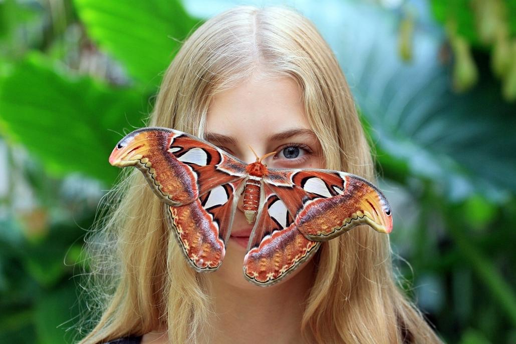 afp. 2014. állatos nagyítás, pillangó, lepke szállt az orrára - 2014.09.16. Csehország, Brno - This picture taken on September 16, 2014 shows Attacus atlas butterfly siting on a visitor's face, at the Botanical Garden of Masaryk University in Brno. There