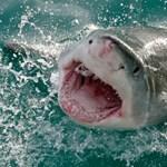 Videó: ilyen, amikor a GoPro egy cápával találkozik