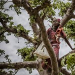 Lassul az erdőirtás mértéke és terjedőben a fenntartható erdőgazdálkodás