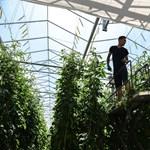 Kiküldené a földekre a fiatalokat az új agrárminiszter