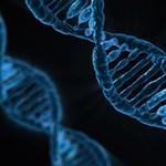 Kétperces biológiateszt: mennyit tudtok az emberi testről?