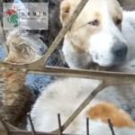 Embertelen körülmények között tartották kutyák százait
