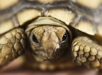 Teknősbéka talált fejen egy idős nőt Floridában