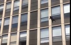 Kiugrott egy macska egy lángoló épület ötödik emeletéről, pattant egyet, majd elszaladt