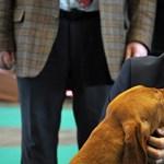 Elnézést kért Semjén védegyletének állatkínzásról értekező lapja