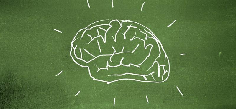 Íme a videó, amit már 6 millióan láttak: milyen lenne agy nélkül élni?