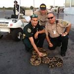 Óriáskígyóra bukkantak a floridai reptéren - fotó