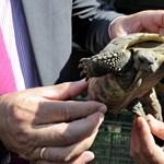 Egy látogató agyonütötte a budapesti állatkert görög teknősét, amiért az a kezére piszkított