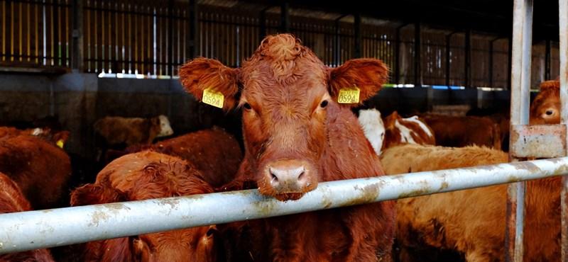 Aggódik a Földért? Egyen kevesebb húst és tejterméket!