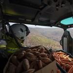 Helikopterekből szórják az ételt Ausztráliában, hogy legyen mit enniük az állatoknak