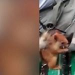 Így dolgozik a zsebtolvaj mókus (videó)
