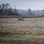 Tovább hadakozhatnak a vadászok ifjabb Mészáros Lőrinccel, ma sem lett jogerős ítélet