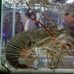Ebben az étteremben marihuánával kábítják el a homárokat, mielőtt megölik őket