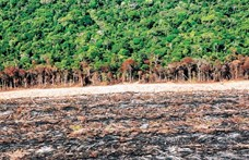 Eltűnhet a trópusi növényfajok harmada