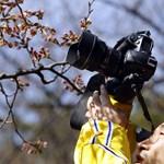 Sakura-ünnep a Füvészkertben