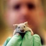 Új felfedezés az emlősök szexuális preferenciájáról