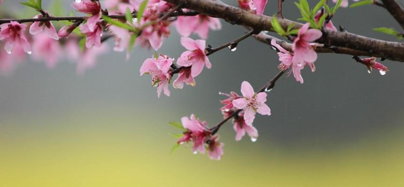 Igazi tavaszi időt láthatunk az ablakokon keresztül