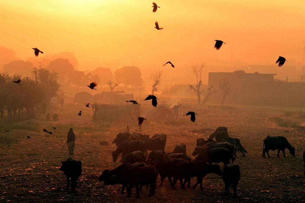 Pakisztán: varjak röpte napkeltekor Lahore városa felett - 7képei