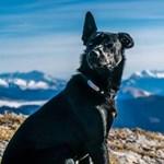 Bíróság elé áll a francia turista kutyáját agyonlövő vadász