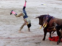 Munka nélkül maradtak a matadorok, jótékonysági bikaviadalt rendeznek a megsegítésükre