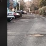 Kátyúban dagonyázó vaddisznót videóztak le Debrecenben