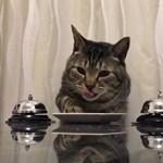 Videó: Ezek a macskák megtanulták, hogy csengetniük kell, hogy enni kapjanak