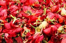 Tulipánfesték és hangszigetelő farmer: bármilyen hulladékot újra lehet hasznosítani