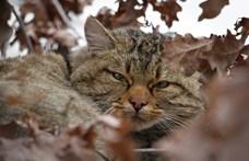Rejtélyes kóbor macska támadása miatt hajtott végre kényszerleszállást egy utasszállító gép
