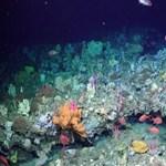Különlegesen szép kerteket fedeztek fel a tenger mélyén – videó