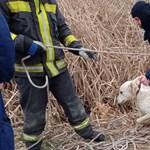 Szigorúbban szabályozzák az állatkereskedőket, hogy kevesebb legyen az állatkínzó szaporítás