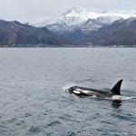 Mi a közös a gyilkos bálnában és a menedzserben? Aki tudja, jó pénzt csinál belőle