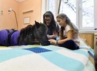 Texasi miniló segít a Bethesda Gyermekkórházban fekvő beteg gyerekeknek - fotó