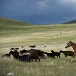 Gyújtogató lovasok támadtak geológusokra Kirgizisztánban
