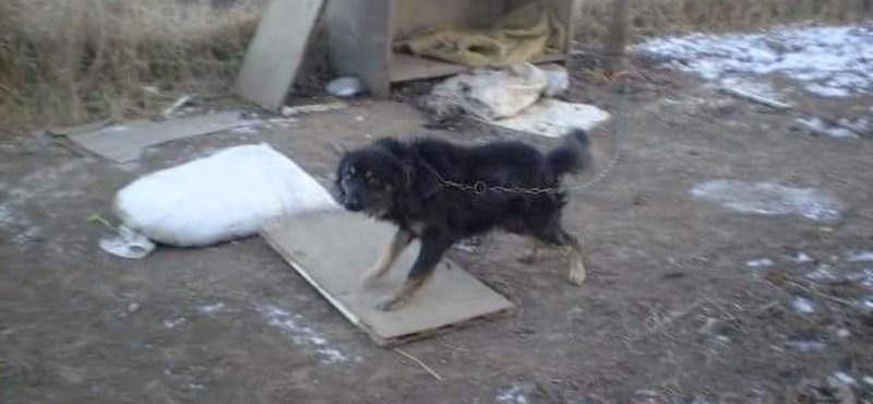"""""""Miért nem takarózott be"""" - hagytak halálra fagyni egy láncra kötött kutyát?"""