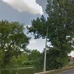 Egészséges fasort vágatott ki az önkormányzat Miskolcon
