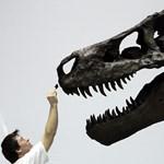 65 millió éves dinótojást készülnek bemutatni Szegeden