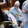 Erdélyben is megjelent a koronavírus