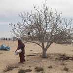Beomlott egy illegális aranybánya, 52 halott Csádban