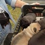 Lebukott a kutyatolvaj, cuki videó készült a happy endről